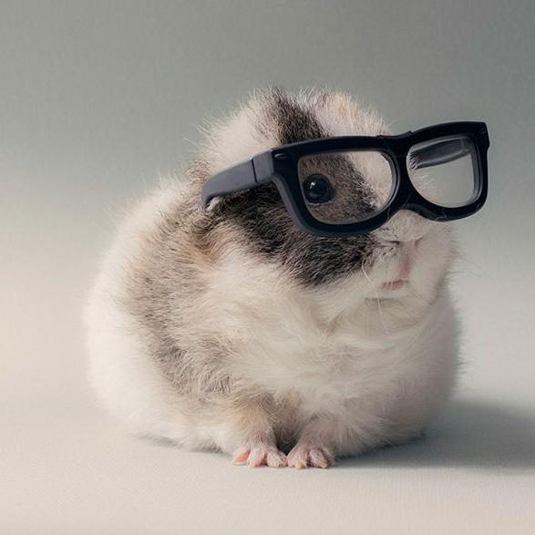 Sejarah tentang Hamster