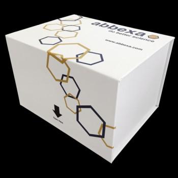 8-epi-Prostaglandin F2 Alpha Elisa Kit