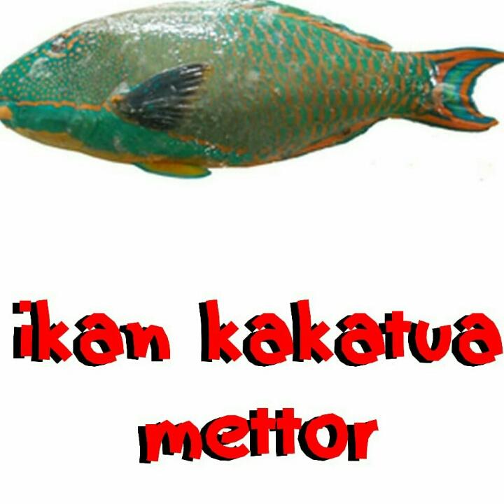 Ikan Kakatua Mettor