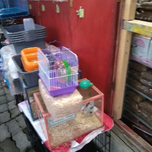 Makanan Kucing Smp 1