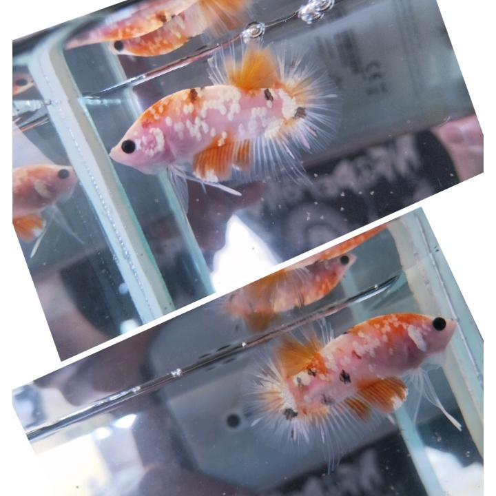 Nemo Coper