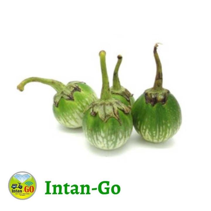 Terung Sayur